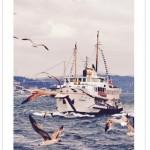 Günün iPhone Uygulaması (Turkogram)